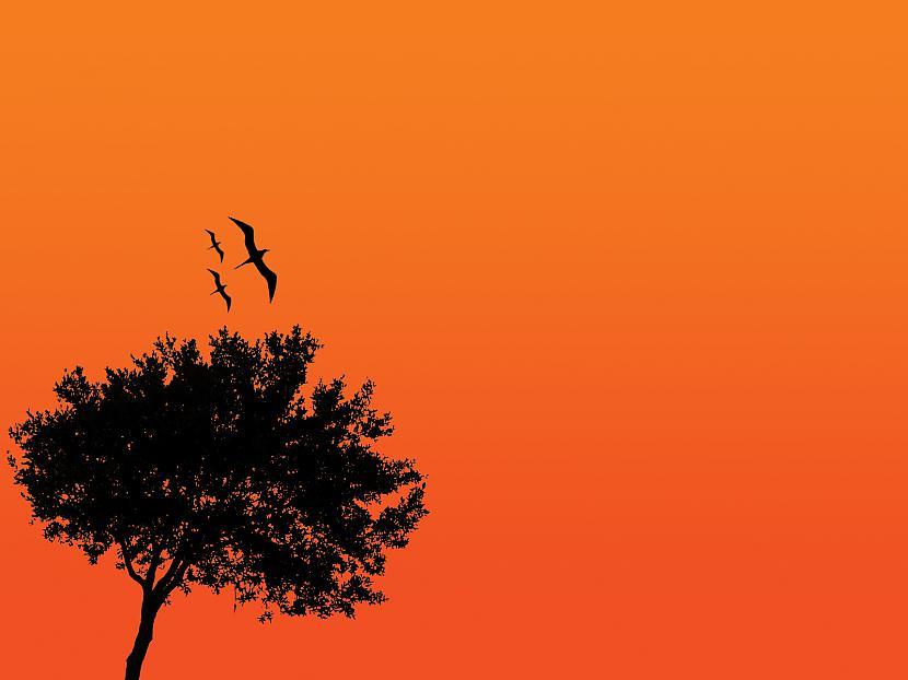Melnā un oranžā krāsa ir... Autors: Bloody April 21 fakts par un ap Helovīniem