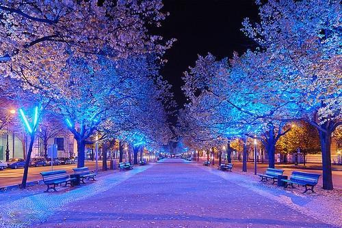 Autors: Shokoo Let It Snow:))