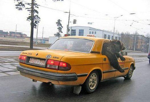 Taxi Autors: aivix LV Skaties un redzēsi!