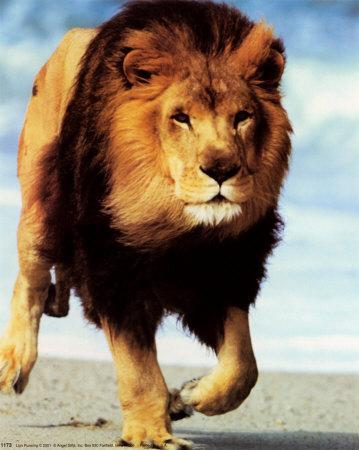 Lauva Domā  tieši Runā ... Autors: meitēnsss Iespējams īsākais horoskops.