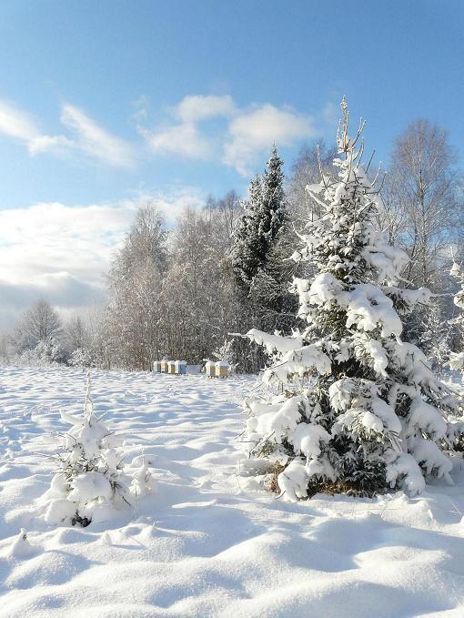 Priecīgus zsvētkusCeru ka... Autors: trions Ziemassvētki citur pasaulē