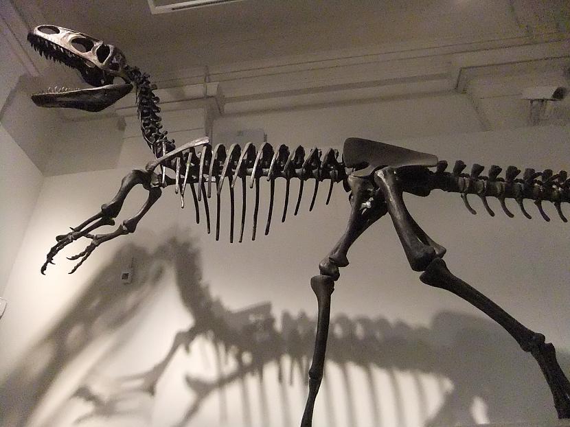 Neovenators Autors: sekers Skeletori 2