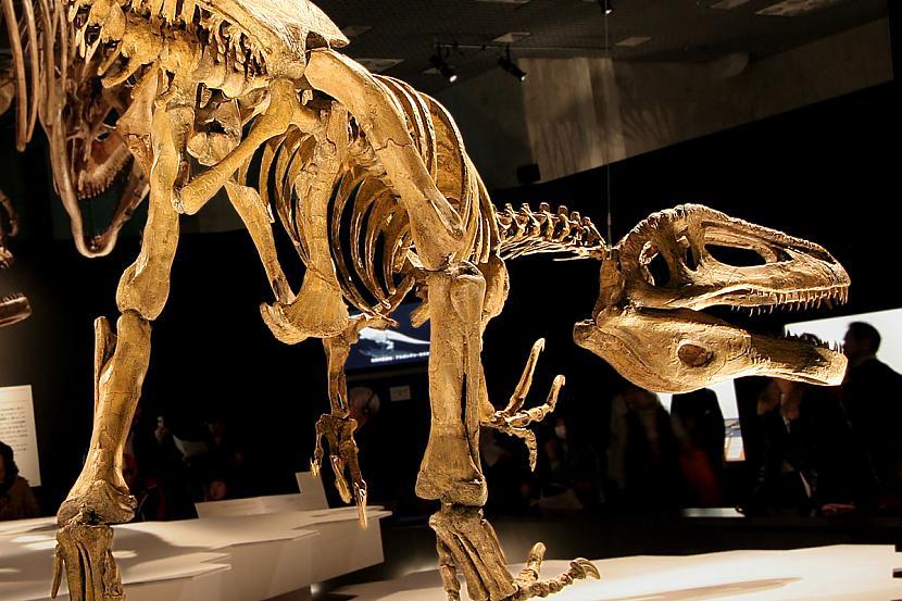 Megaraptors Nav dromaeozaurīds Autors: sekers Skeletori 2