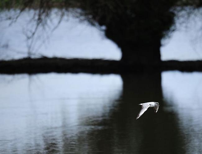 Autors: maciska Labākās 2011 gada  dzīvās dabas bildes