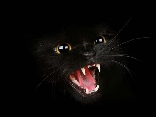 Melnais kaķis Folklora par un... Autors: taarps Māņticība