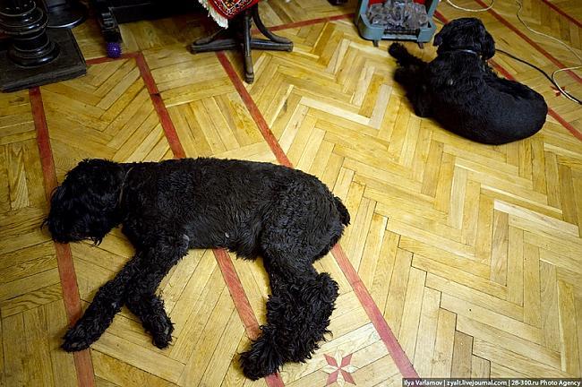 Suņi viņa mājā vienmēr... Autors: Meunis Viktora māja pie Kremļa...
