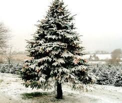 Lai sasniegtu Ziemassvētku... Autors: Monster energy Fakti par ziemassvetku eglītēm