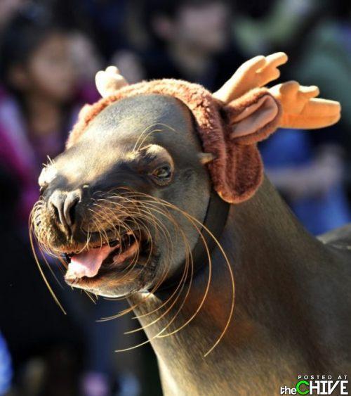 Autors: HokejHoliķis Smieklīgas dzīvnieku bildes! :D