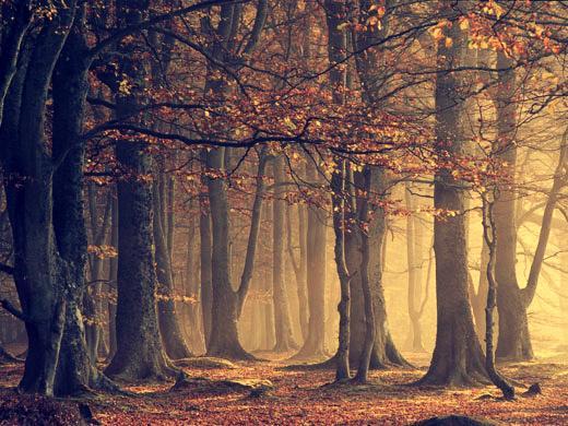 Autors: TheLittlebuu Forest..