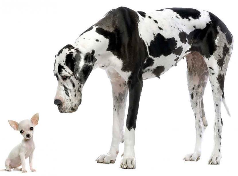 Autors: DogPeople Vācu dogs