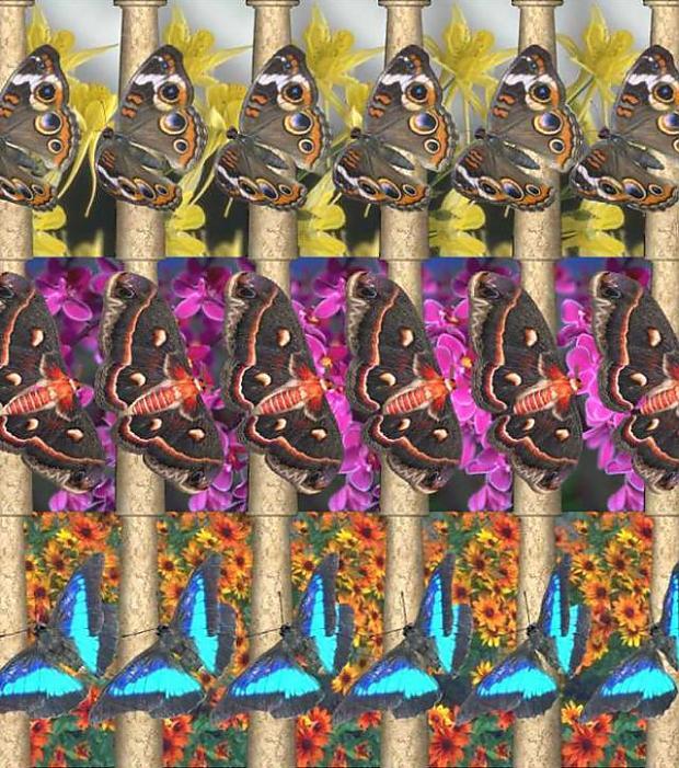 Taureņi Autors: mousetrap 3D attēli-Maģiskā acs!