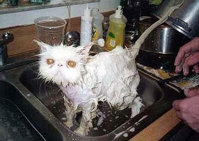 Autors: dzeimsons Kā mazgāt kaķi