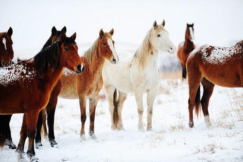horse Autors: Lincho Some animals=)