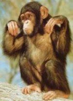Gudrākais dzīvnieks  šimpanze... Autors: Fosilija Dzīvnieki ar neparastām spējām!