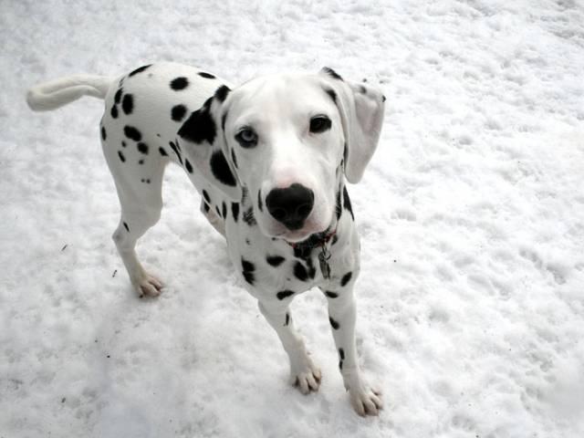 smuks suns Autors: angelus3D skaisti dzīvnieki 3 (sunīši)