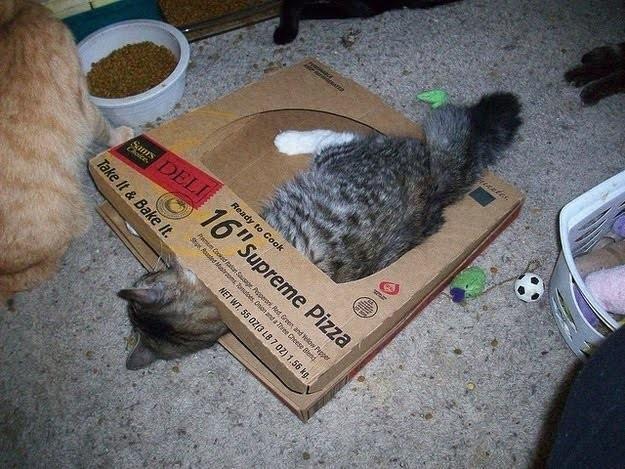 Autors: Saimons Kauels Kaķiem patīk picu kastes :)
