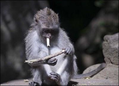 Katru minūti pasaulē piedzimst... Autors: fosilijs interesanti fakti+smēķējoši pērtiķi