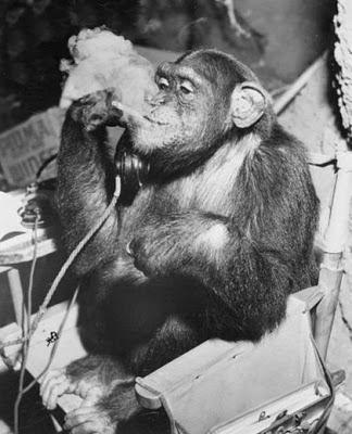 Gādā ēzeļi nogalina vairāk... Autors: fosilijs interesanti fakti+smēķējoši pērtiķi