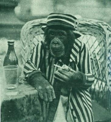 Kad saplīst glāze tad lauzkas... Autors: fosilijs interesanti fakti+smēķējoši pērtiķi