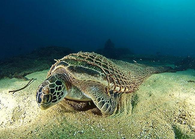 Autors: Se0ne Neticami aizraujošā zemūdens dzīve