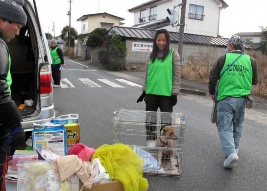 To visu dara United Kennel... Autors: Jeims0n Pazudušie dzīvnieki no Fukushimas