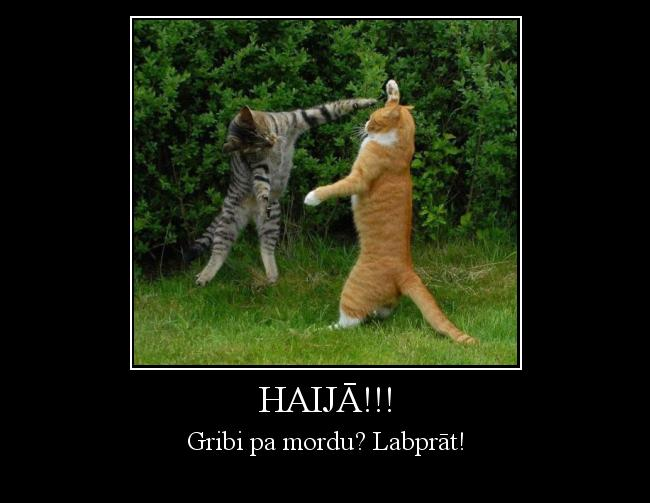 Autors: Wolfia04 Haijā!!!