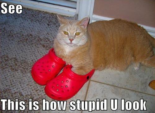 Autors: Qwerty D 30 LOL cats