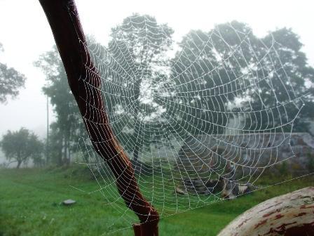 Zirnekļa tīkls ir izturīgāks... Autors: La Cosa Daži interesanti, bet pilnīgi bezjēdzīgi fakti.