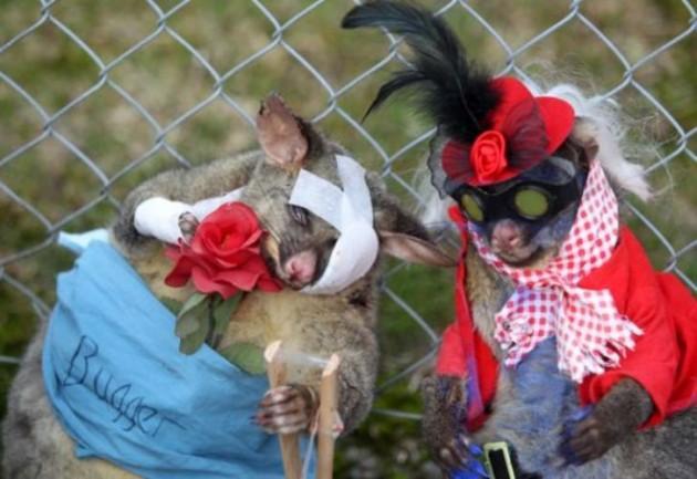 Pēc scaronīs ziņas... Autors: BezzeeCepums Fotokonkurss par skaistāko mirušo oposumu