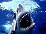 Laikam jau Latvijā haizivis... Autors: Maxiitc Iespējamība nomirt?!
