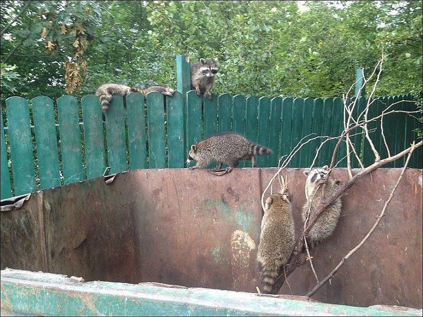Autors: Fosilija Dzīvnieki slazdā