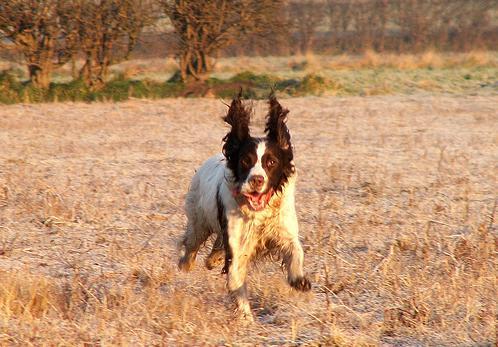 Vai tie ir ragi Autors: MoonWolf Jautrās suņu ausis! :D