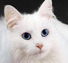 7 Autors: momoo999 kaķu milētājiem 2
