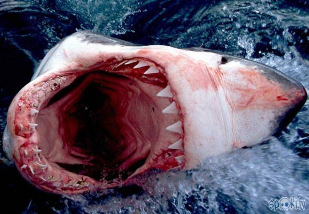 Lielbritānijas avīze The Times... Autors: sabaa310 Haizivs puncī