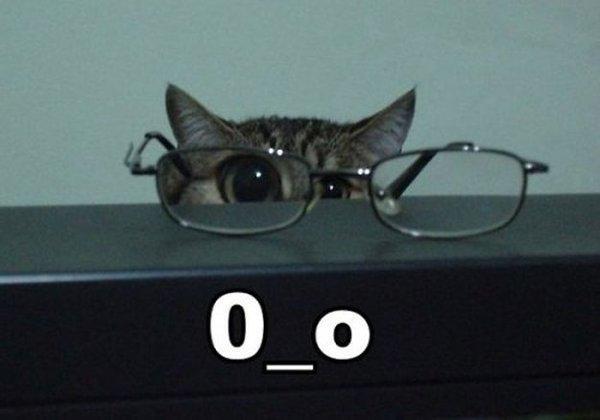 Kaķītim brilles vajag  Autors: gopniks2 Smieklīgie kaķi !