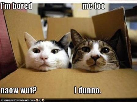 Ta jau nav ka nepatīk  Autors: gopniks2 Smieklīgie kaķi !