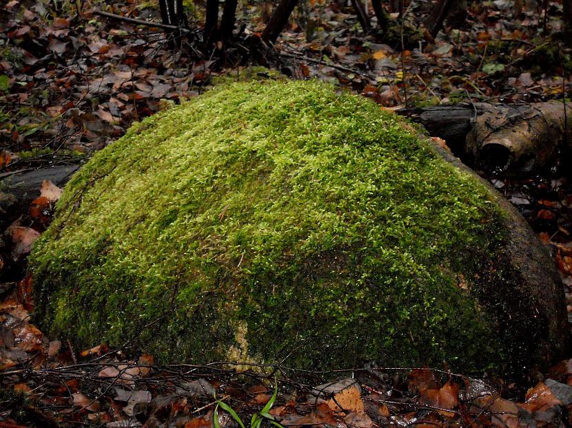 Tad devos uz piemājas mežu pēc... Autors: Agresija Adventes vainags