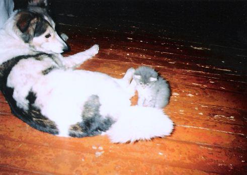 Viss sākās ar manu pirmo... Autors: zobusāpes Apgāžam pieņēmumus... jeb ''Kā suns ar kaķi