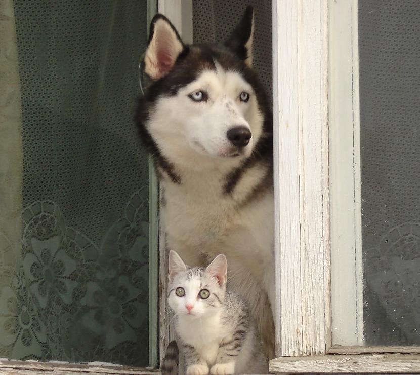 Un tā viņas kļuva par... Autors: zobusāpes Apgāžam pieņēmumus... jeb ''Kā suns ar kaķi
