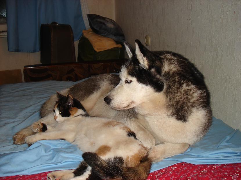 Viss sākās kad Katnisa saprata... Autors: zobusāpes Apgāžam pieņēmumus... jeb ''Kā suns ar kaķi