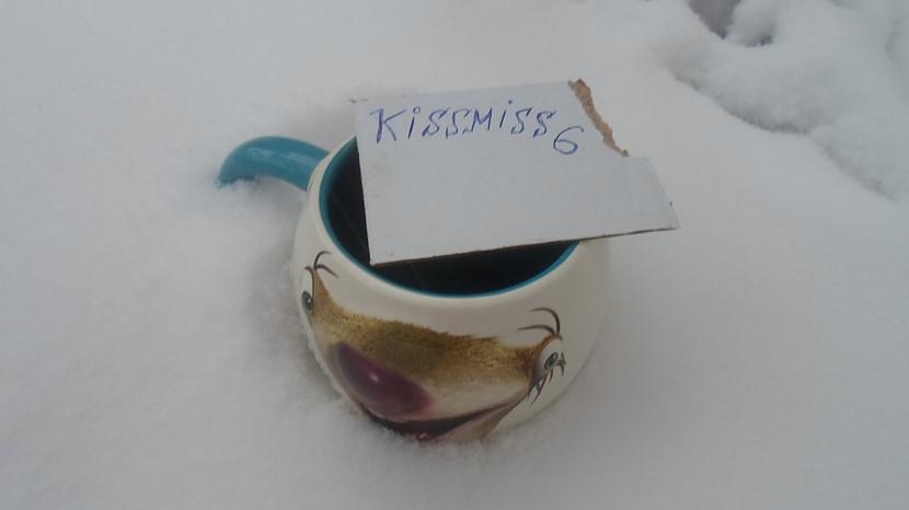 Autors: Fosilija krūzīte sniegā