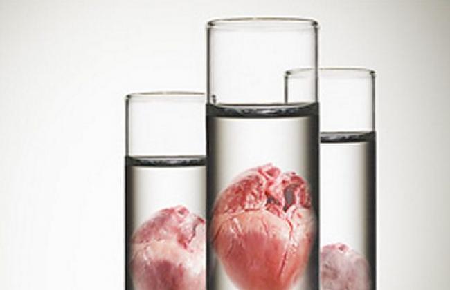 Izmanto jaunus orgānus nbsp... Autors: zlovegood Jaunas metodes, kā pagarināt dzīves ilgumu