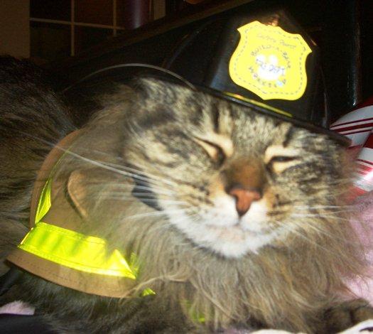 Kaķi ir glābuscaroni cilvēkus... Autors: Kaprālis Fakti par kaķiem
