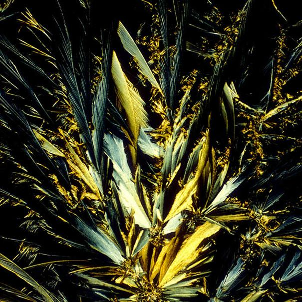 quotEnglish Oatmeal Stoutquot Autors: Fosilija Alkoholiskie kokteiļi zem mikroskopa