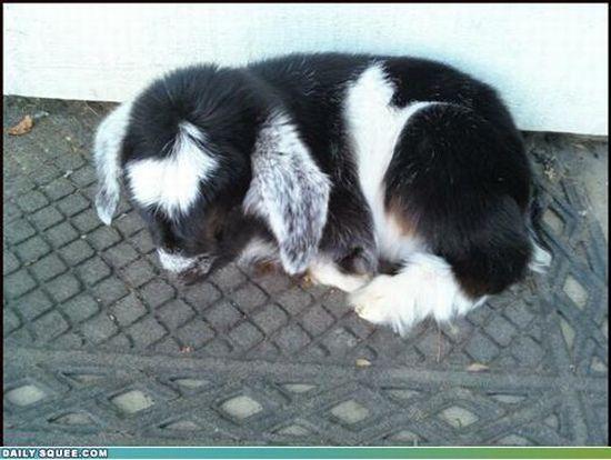 Autors: janex1 Ak, šie smieklīgie dzīvnieki! #4