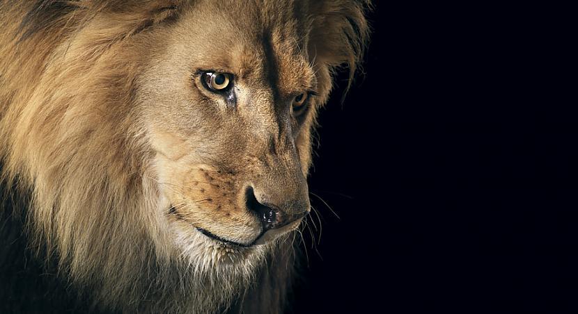 Scaronī ir ļoti grūta... Autors: Fosilija Dzīvnieku cilvēciskā puse