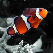 Bildē redzamā zivtiņa... Autors: varenskrauklis Fakti, kuri liek pasmaidīt, bet ir patiesi!