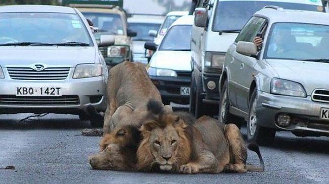 EXCLUSIVE  NAIROBI KENYA ... Autors: janex1 Smieklīgas vai vienkārši skaistas bildes #11