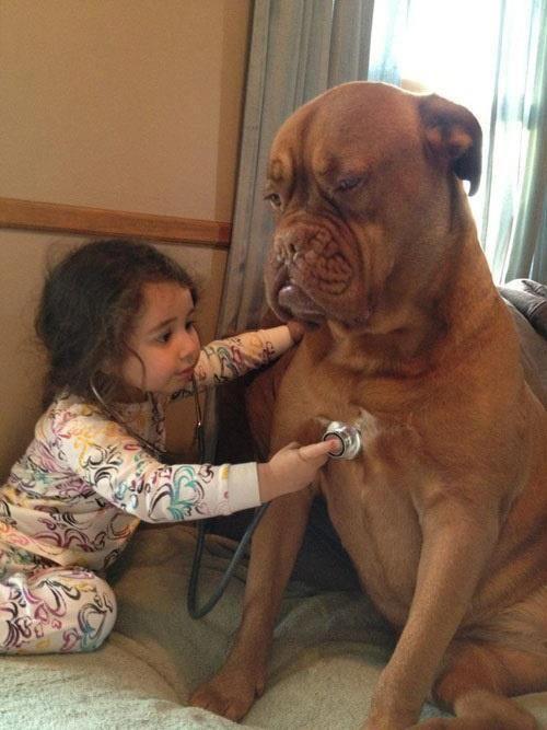 Grummpy dog D Autors: janex1 Smieklīgas vai vienkārši skaistas bildes #11
