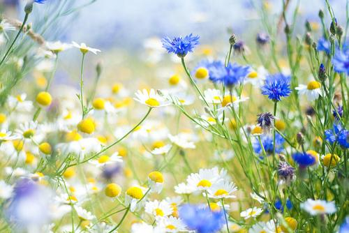 Kad ceļscaron ir vienos ziedos... Autors: sirdsmeitene11 Tekstini un Bildes 9